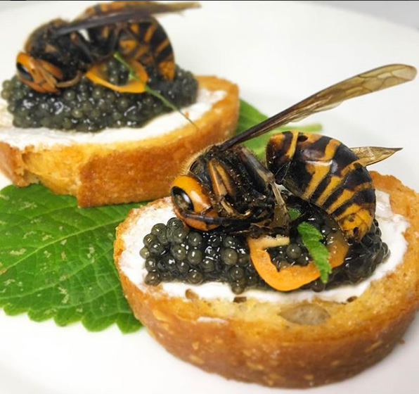 Edible Japanese Wasp