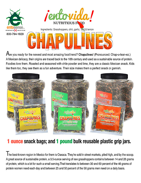 Chapulines For Sale in Bulk