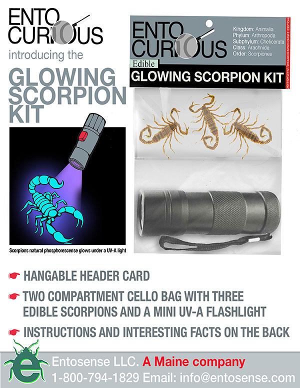 Scorpions do glow